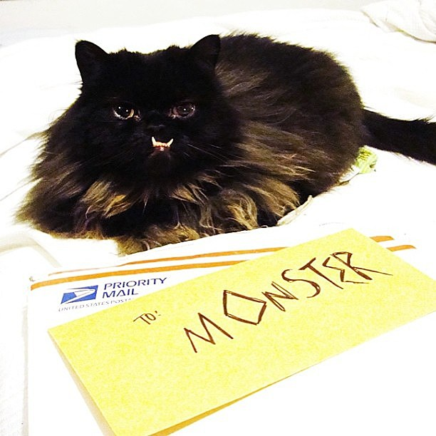 princess monster truck vs grumpy cat wwwpixsharkcom
