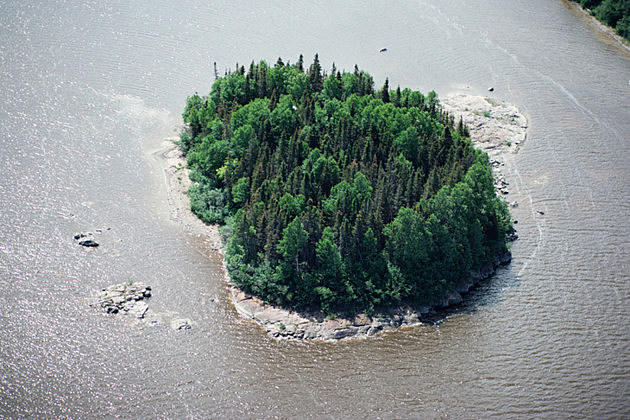 Aerial view of trees on island in river
